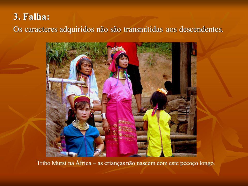 3. Falha: Os caracteres adquiridos não são transmitidas aos descendentes. Tribo Mursi na África – as crianças não nascem com este pecoço longo.