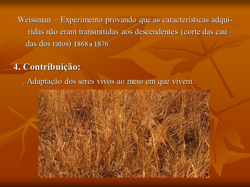 Duas espécies de tentilhões (Fringillidae) diferentes devido a irradiação adaptativa.