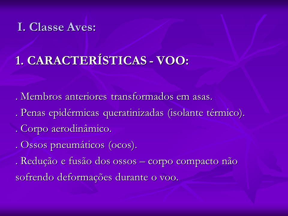 I. Classe Aves: 1. CARACTERÍSTICAS - VOO:. Membros anteriores transformados em asas.. Penas epidérmicas queratinizadas (isolante térmico).. Corpo aero