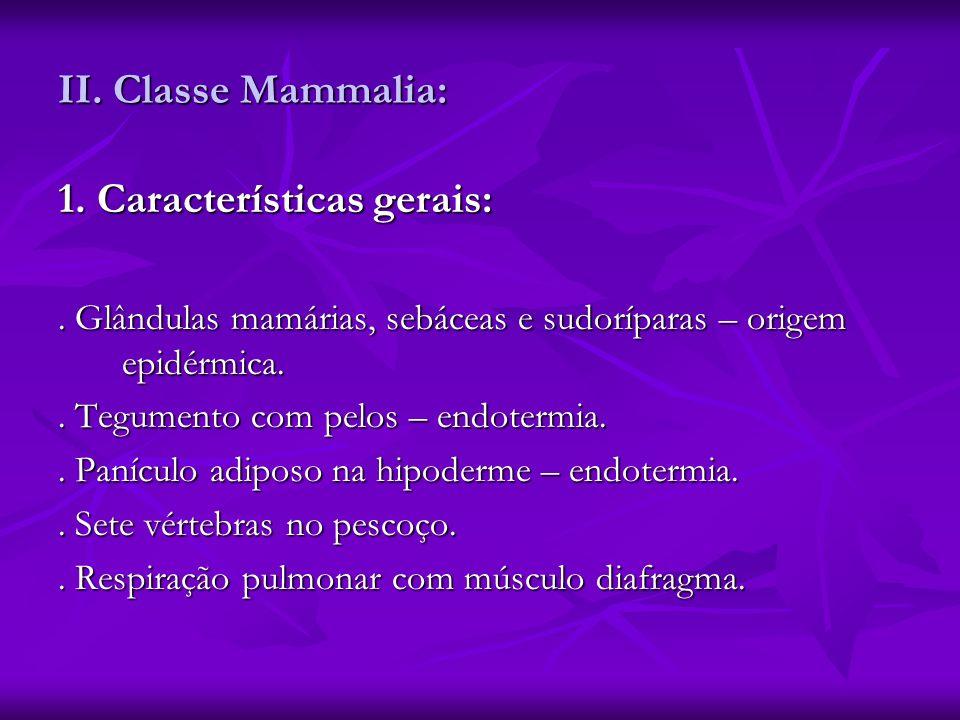 II. Classe Mammalia: 1. Características gerais:. Glândulas mamárias, sebáceas e sudoríparas – origem epidérmica.. Tegumento com pelos – endotermia.. P