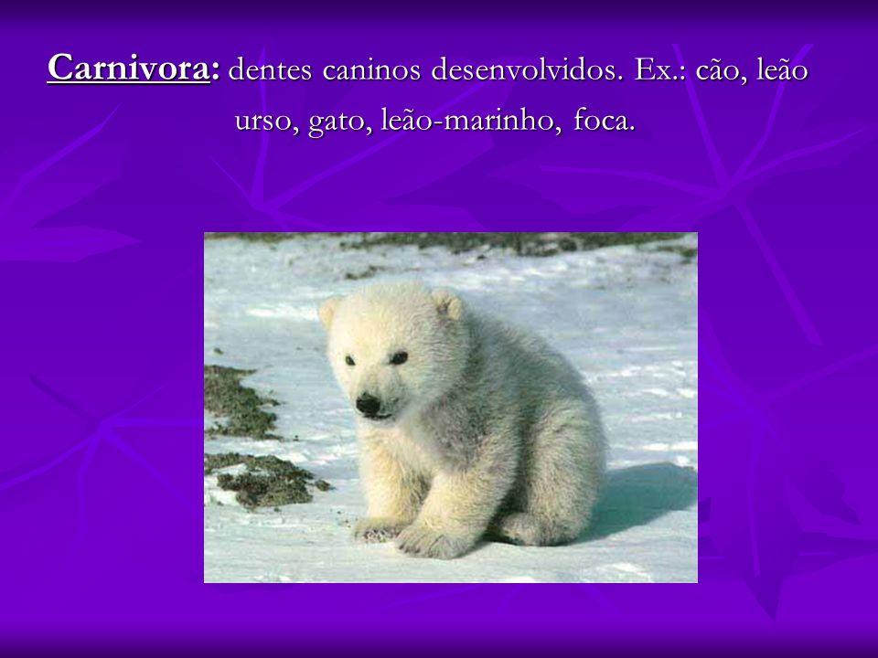 Carnivora: dentes caninos desenvolvidos. Ex.: cão, leão urso, gato, leão-marinho, foca. urso, gato, leão-marinho, foca.