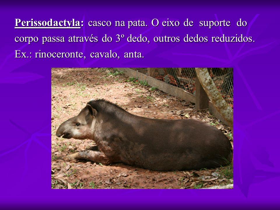 Perissodactyla: casco na pata. O eixo de suporte do corpo passa através do 3º dedo, outros dedos reduzidos. Ex.: rinoceronte, cavalo, anta.