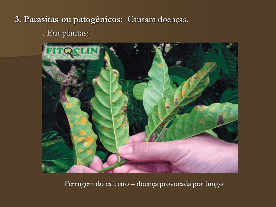 3. Parasitas ou patogênicos: Causam doenças.. Em plantas: Ferrugem do cafeeiro – doença provocada por fungo