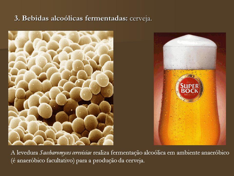 3. Bebidas alcoólicas fermentadas: cerveja. A levedura Saccharomyces cerevisiae realiza fermentação alcoólica em ambiente anaeróbico (é anaeróbico fac