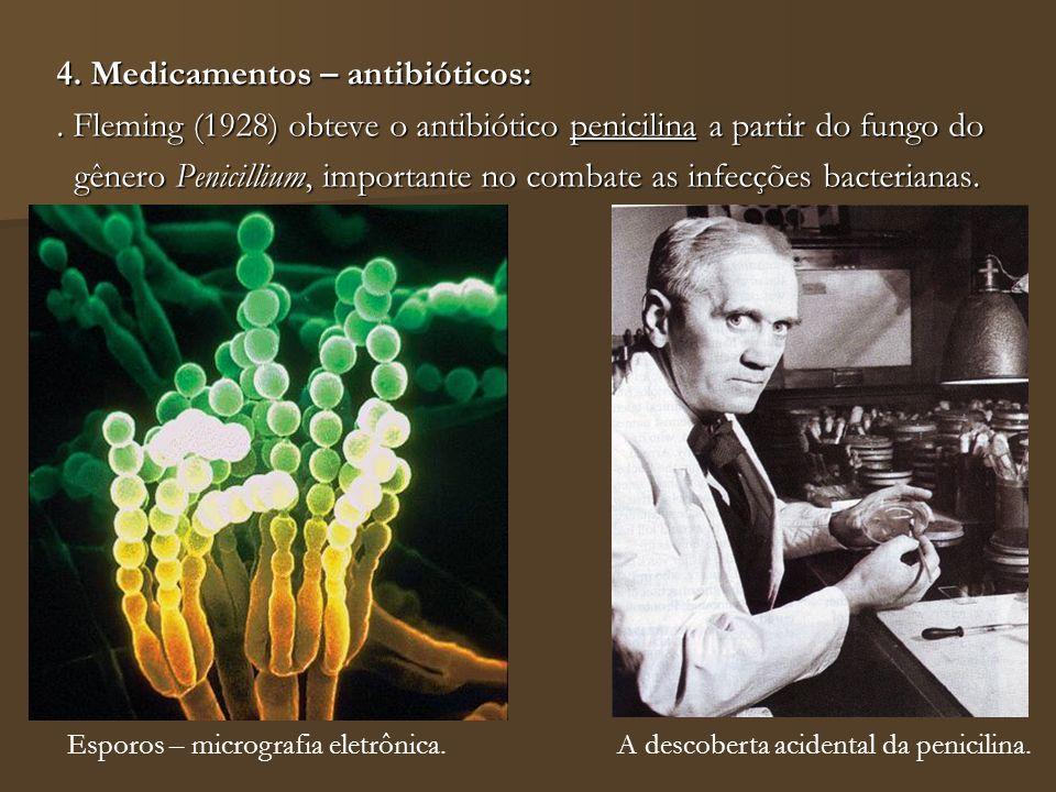 4. Medicamentos – antibióticos:. Fleming (1928) obteve o antibiótico penicilina a partir do fungo do gênero Penicillium, importante no combate as infe