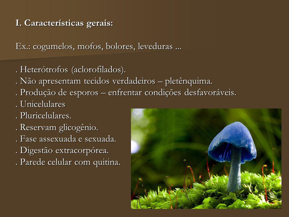 I. Características gerais: Ex.: cogumelos, mofos, bolores, leveduras.... Heterótrofos (aclorofilados).. Não apresentam tecidos verdadeiros – pletênqui