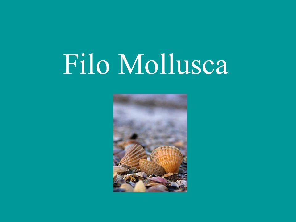 Filo Mollusca