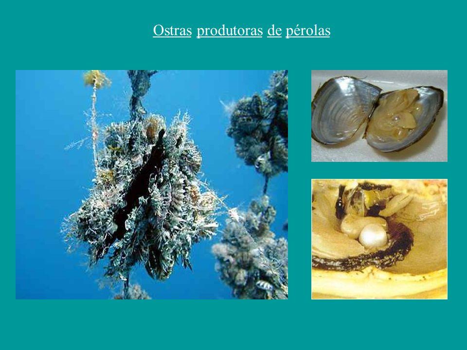 Ostras produtoras de pérolas