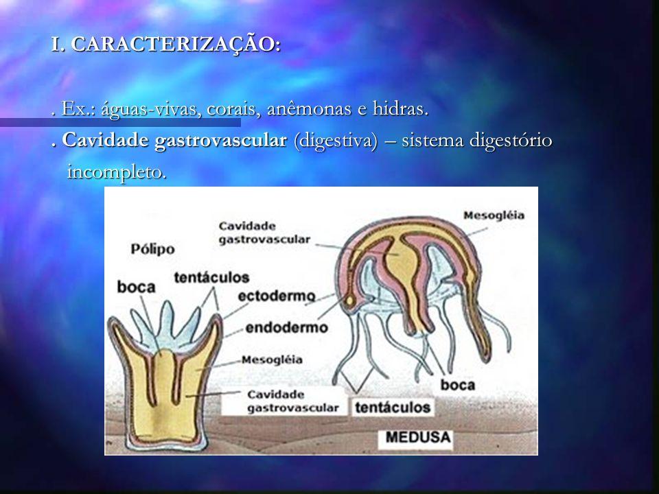 I.CARACTERIZAÇÃO:. Ex.: águas-vivas, corais, anêmonas e hidras..