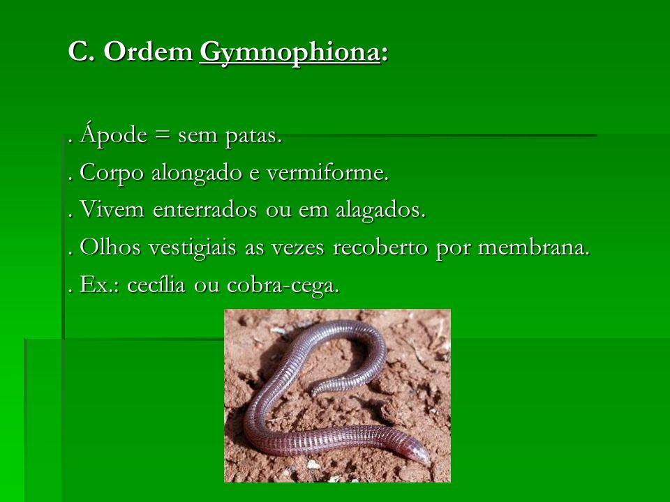 C. Ordem Gymnophiona:. Ápode = sem patas.. Corpo alongado e vermiforme.. Vivem enterrados ou em alagados.. Olhos vestigiais as vezes recoberto por mem