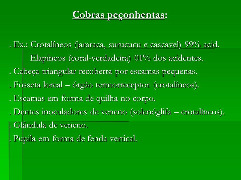 Cobras peçonhentas:. Ex.: Crotalíneos (jararaca, surucucu e cascavel) 99% acid. Elapíneos (coral-verdadeira) 01% dos acidentes. Elapíneos (coral-verda
