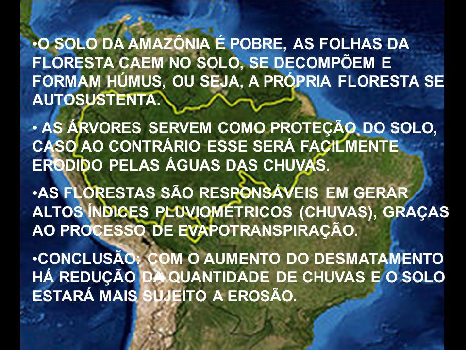 O SOLO DA AMAZÔNIA É POBRE, AS FOLHAS DA FLORESTA CAEM NO SOLO, SE DECOMPÕEM E FORMAM HÚMUS, OU SEJA, A PRÓPRIA FLORESTA SE AUTOSUSTENTA. AS ÁRVORES S