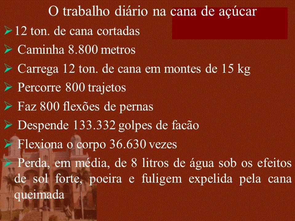 O trabalho diário na cana de açúcar 12 ton. de cana cortadas Caminha 8.800 metros Carrega 12 ton. de cana em montes de 15 kg Percorre 800 trajetos Faz