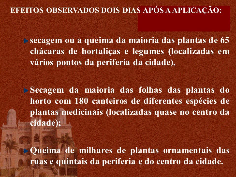 EFEITOS OBSERVADOS DOIS DIAS APÓS A APLICAÇÃO: secagem ou a queima da maioria das plantas de 65 chácaras de hortaliças e legumes (localizadas em vário