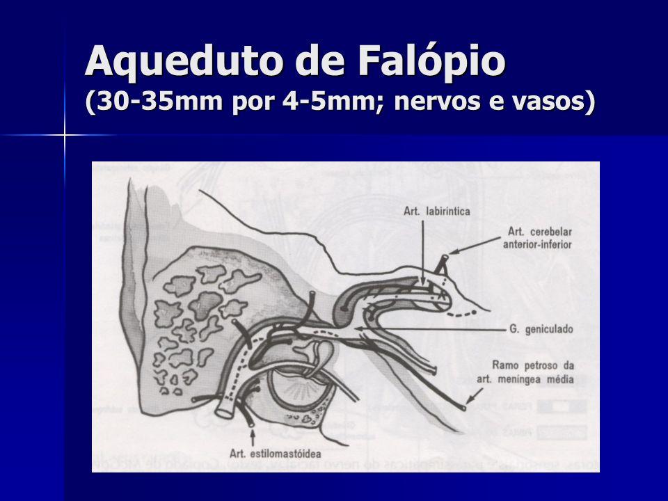Anatomia: Segmentos do nervo facial Intracraniano Intracraniano Meatal Meatal Labiríntico (2-4 mm) Labiríntico (2-4 mm) Timpânico (11 mm) Timpânico (11 mm) Mastoídeo (13 mm) Mastoídeo (13 mm) Extracraniano Extracraniano