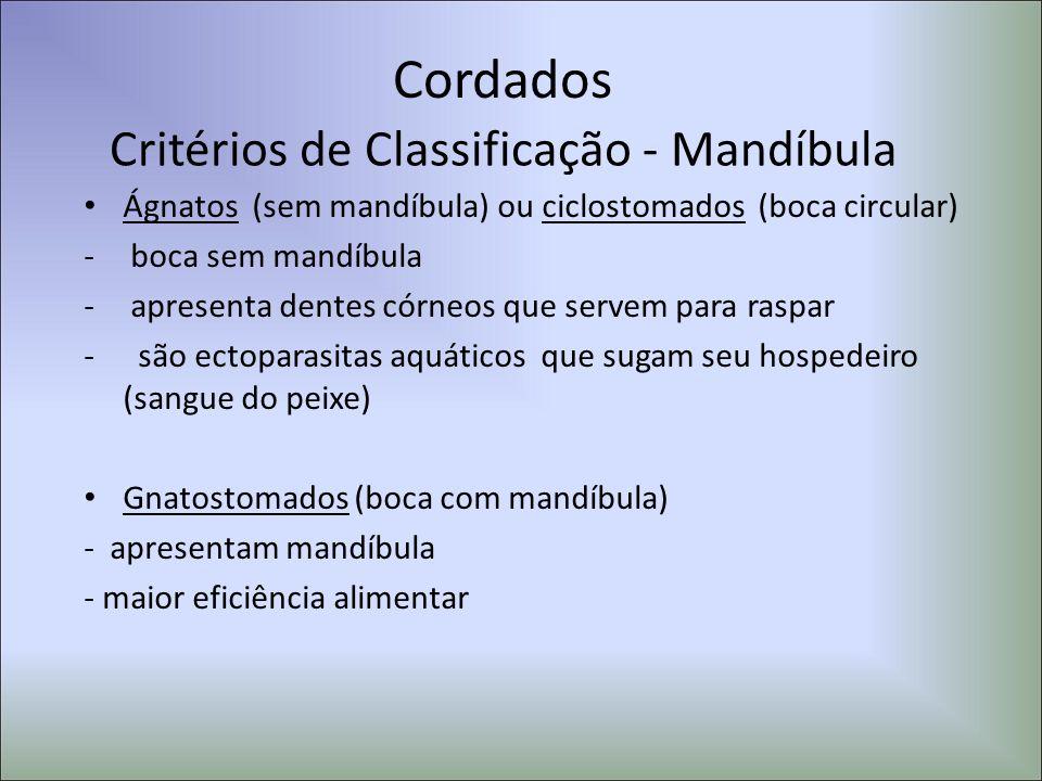 Cordados Critérios de Classificação - Mandíbula Ágnatos (sem mandíbula) ou ciclostomados (boca circular) - boca sem mandíbula - apresenta dentes córne