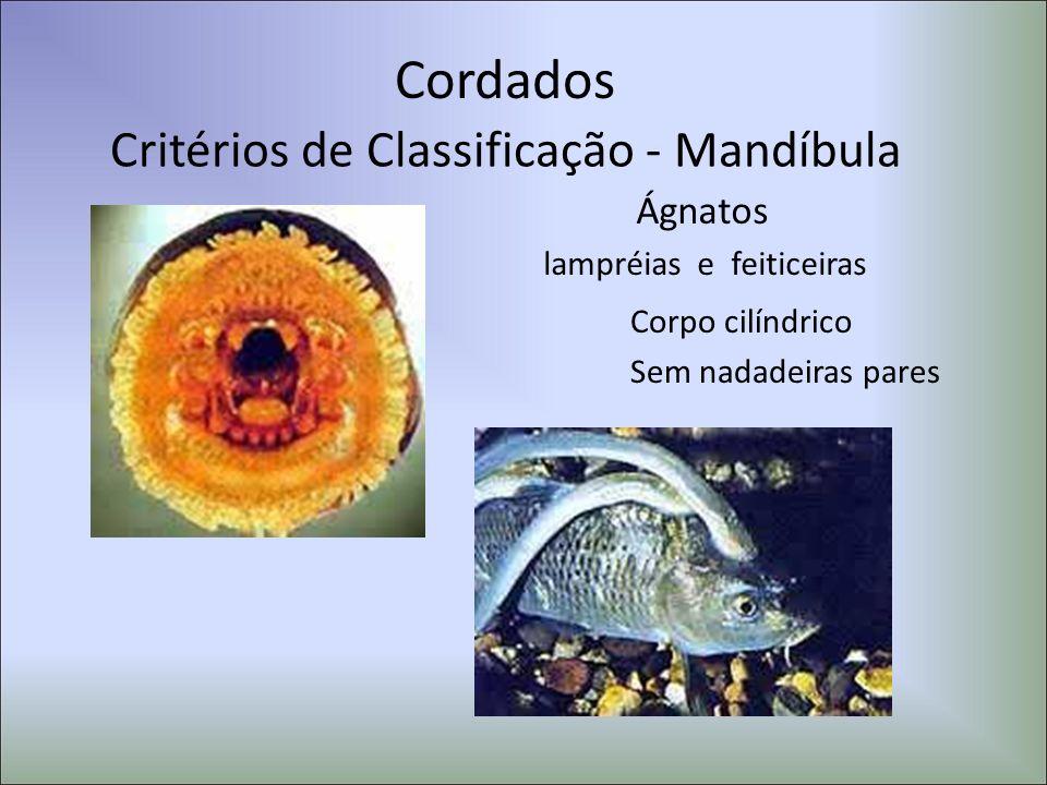 Cordados Critérios de Classificação - Mandíbula Ágnatos lampréias e feiticeiras Corpo cilíndrico Sem nadadeiras pares