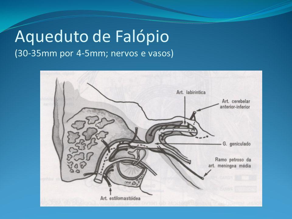 Anatomia: Segmentos do nervo facial Intracraniano Meatal Labiríntico (2-4 mm) Timpânico (11 mm) Mastoídeo (13 mm) Extracraniano