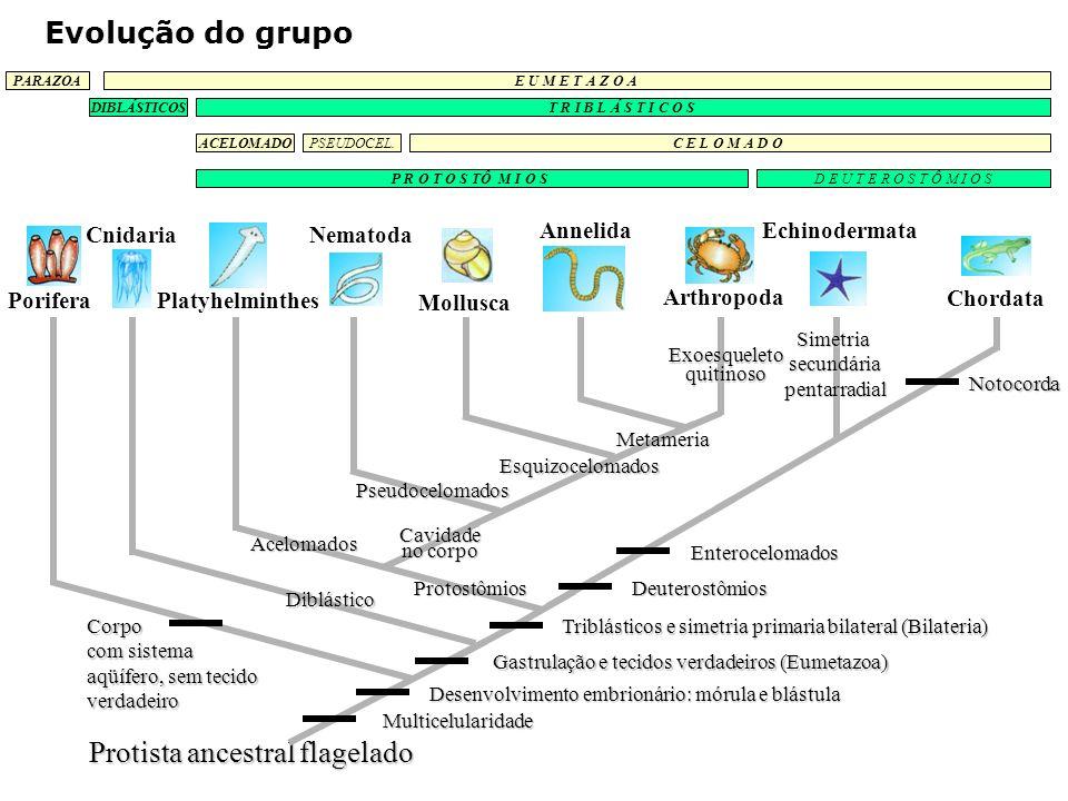 EQUINODERMOS: Evolução e Diversidade Ecologia Padrão Corporal Básico