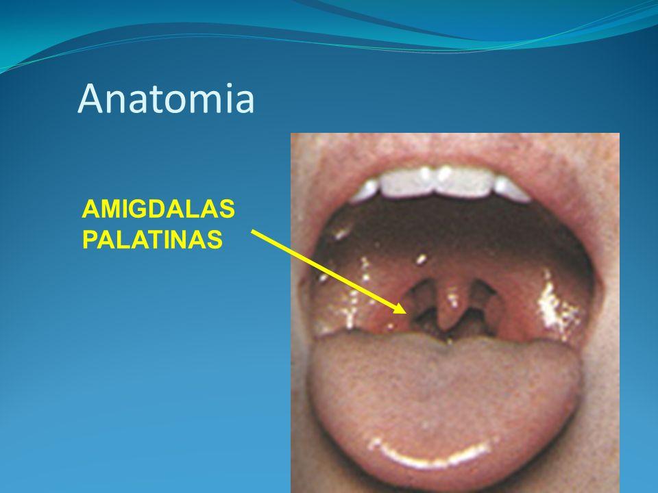Anatomia AMIGDALAS PALATINAS