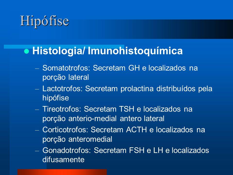 Hipófise Histologia/ Imunohistoquímica – Somatotrofos: Secretam GH e localizados na porção lateral – Lactotrofos: Secretam prolactina distribuídos pela hipófise – Tireotrofos: Secretam TSH e localizados na porção anterio-medial antero lateral – Corticotrofos: Secretam ACTH e localizados na porção anteromedial – Gonadotrofos: Secretam FSH e LH e localizados difusamente
