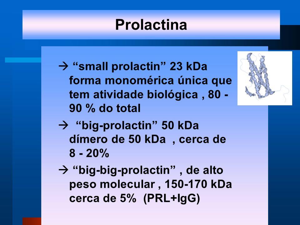 small prolactin 23 kDa forma monomérica única que tem atividade biológica, 80 - 90 % do total big-prolactin 50 kDa dímero de 50 kDa, cerca de 8 - 20% big-big-prolactin, de alto peso molecular, 150-170 kDa cerca de 5% (PRL+IgG) Prolactina