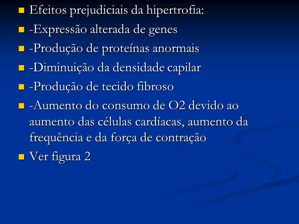 Efeitos prejudiciais da hipertrofia: Efeitos prejudiciais da hipertrofia: -Expressão alterada de genes -Expressão alterada de genes -Produção de prote