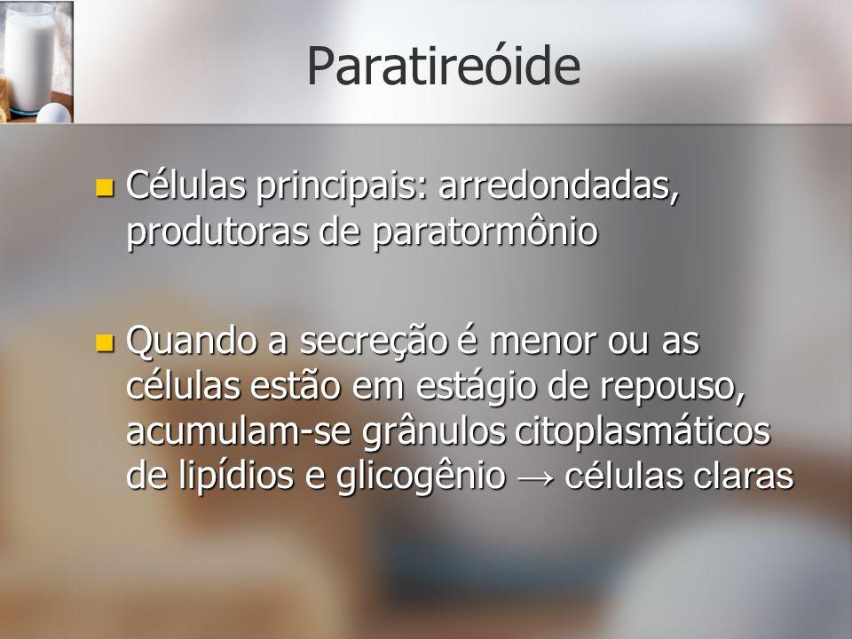 Paratireóide Células principais: arredondadas, produtoras de paratormônio Células principais: arredondadas, produtoras de paratormônio Quando a secreç