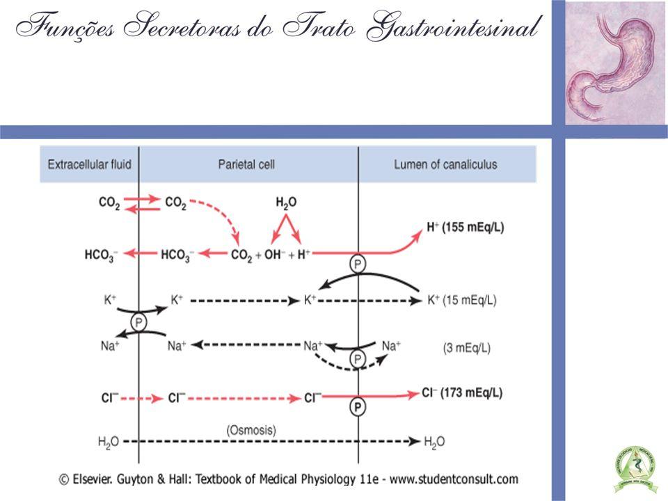 REGULAÇÃO DA SECREÇÃO GÁSTRICA Hormonal: acetilcolina, histamina e gastrina Nervosa: núcleos motores dorsais do vago e sistema nervoso entérico da parede gástrica ( neurotransmissores: acetilcolina e bombesina ) Estimulação nervosa central ( sistema límbico ) ou periférica ( reflexos vagovagais longos e curtos ) Estímulos de distensão, táteis e químicos ( aminoácidos, peptídeos ) Obs: A secreção de grandes volumes de suco gástrico só e possível na presença dos três hormônios juntos.