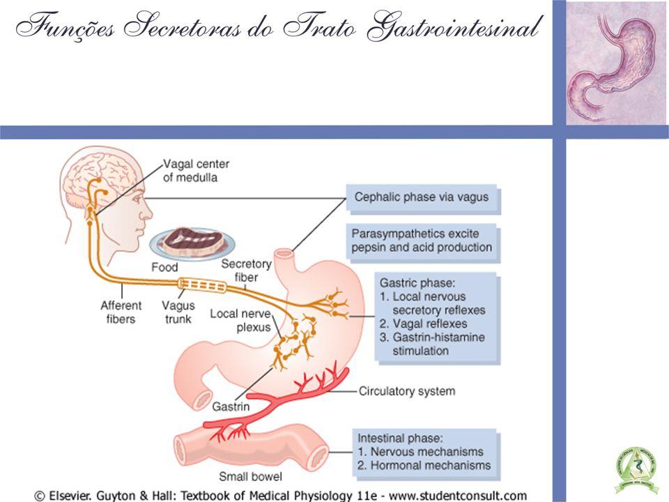 SECREÇÃO PANCREÁTICA Secreção de bicarbonato e água pelos ductos pancreáticos Enzimas proteolíticas: –Tripsina –Quimiotripsina –Carboxipolipeptidase ( libera aa isolados ) –Elastases –Nucleases Enzimas digestoras de carboidratos: –Amilase pancreática ( libera di e trisacarídeos ) Enzimas digestoras de gorduras: –Lipases pancreáticas ( ácidos graxos e monoglicerídeos ) –Colesterol estease –Fosfolipase