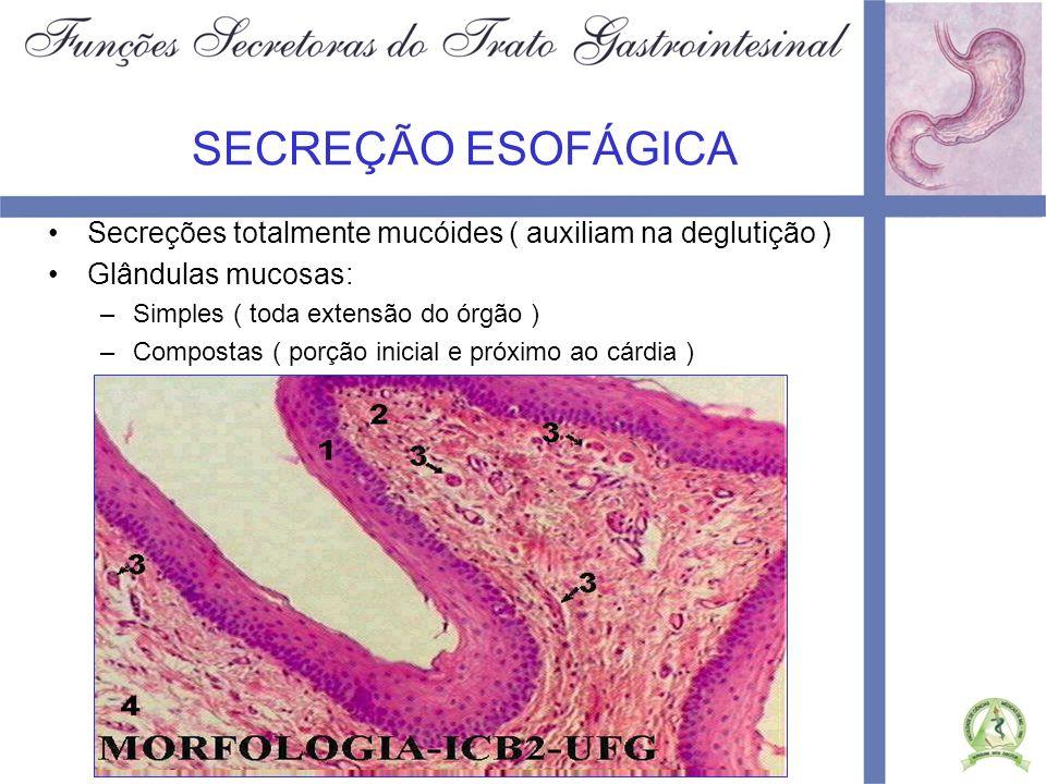 SECREÇÃO GÁSTRICA Células secretoras de muco: –Revestem toda superfície gástrica Glândulas oxínticas: –Corpo e fundo gástricos –Produzem HCl, pepsinogênio, fator intrínseco e muco –Apresentam três tipos celulares: oxínticas ( HCl ), pépticas ( pepsinogênio), cervicais mucosa Glândulas pilóricas –Porção antral –Produzem muco, algum pepsinogênio e gastrina
