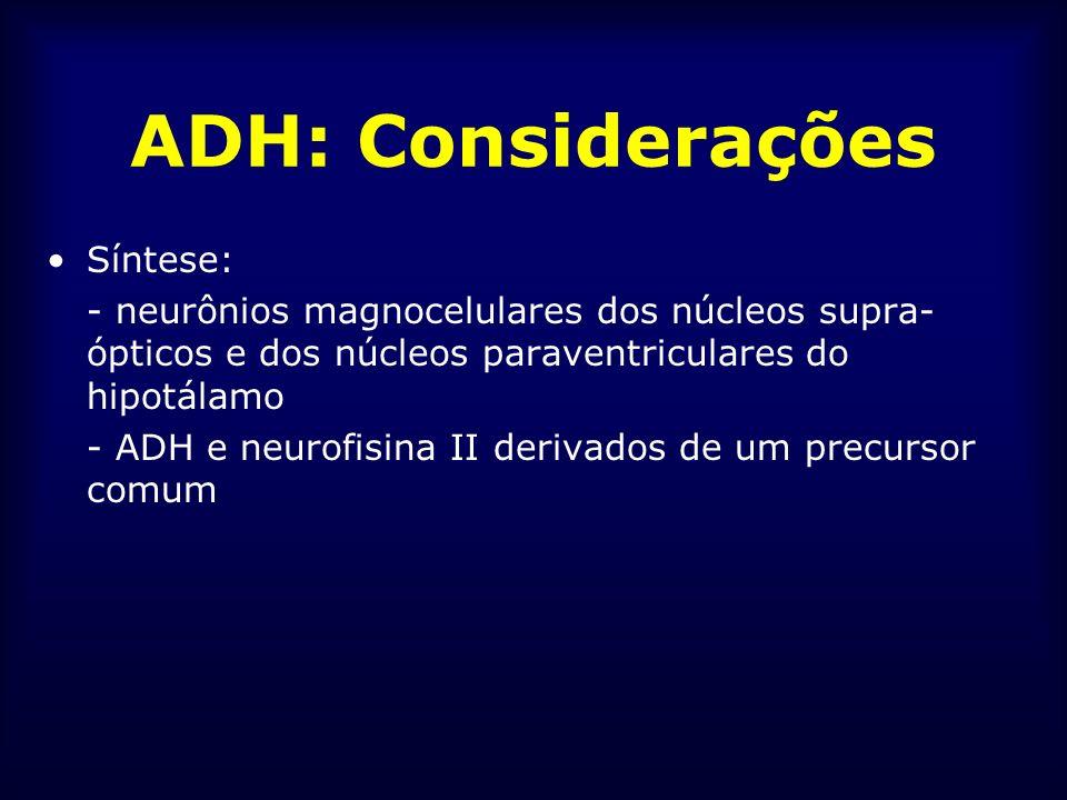 ADH: Considerações Síntese: - neurônios magnocelulares dos núcleos supra- ópticos e dos núcleos paraventriculares do hipotálamo - ADH e neurofisina II