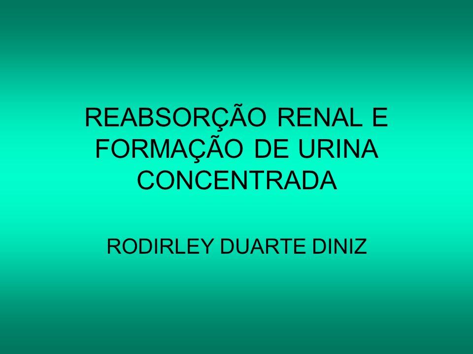 REABSORÇÃO RENAL E FORMAÇÃO DE URINA CONCENTRADA RODIRLEY DUARTE DINIZ