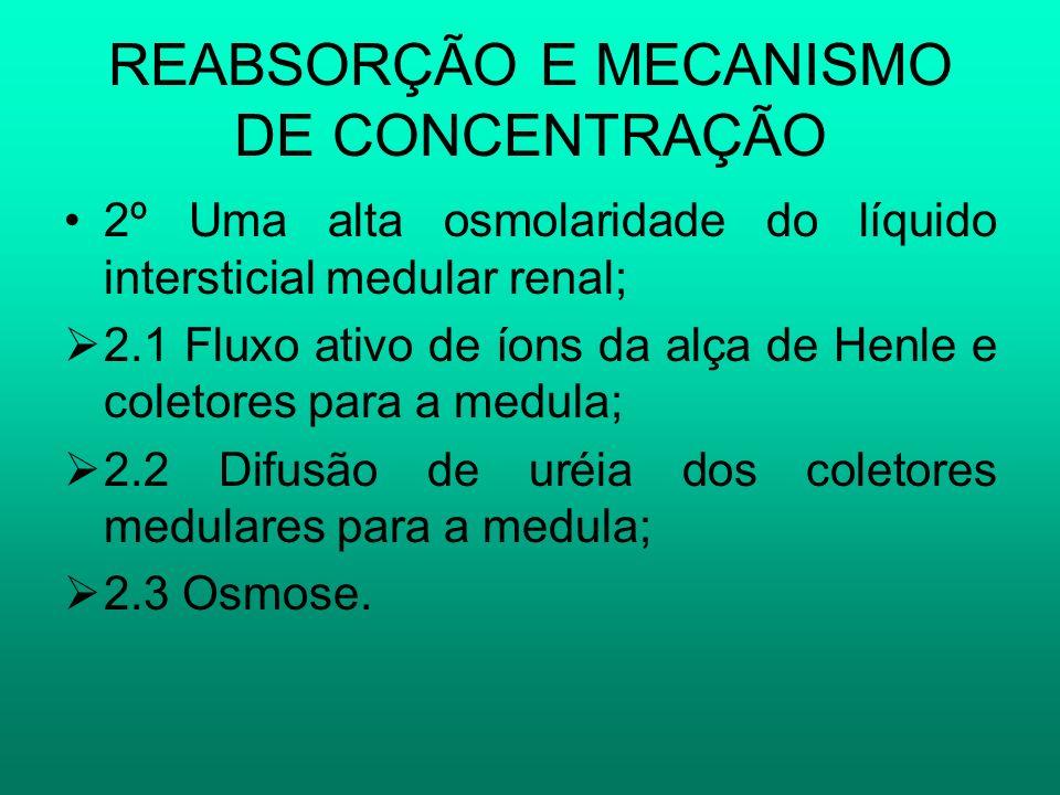 REABSORÇÃO E MECANISMO DE CONCENTRAÇÃO 2º Uma alta osmolaridade do líquido intersticial medular renal; 2.1 Fluxo ativo de íons da alça de Henle e cole