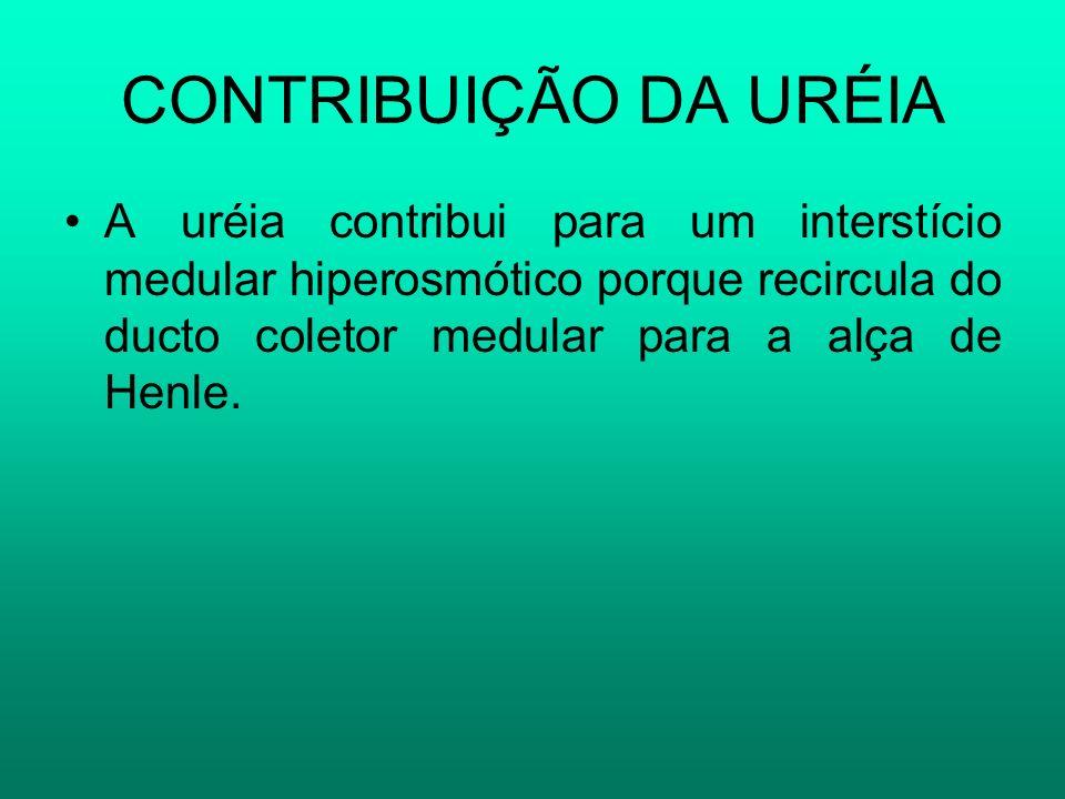 CONTRIBUIÇÃO DA URÉIA A uréia contribui para um interstício medular hiperosmótico porque recircula do ducto coletor medular para a alça de Henle.