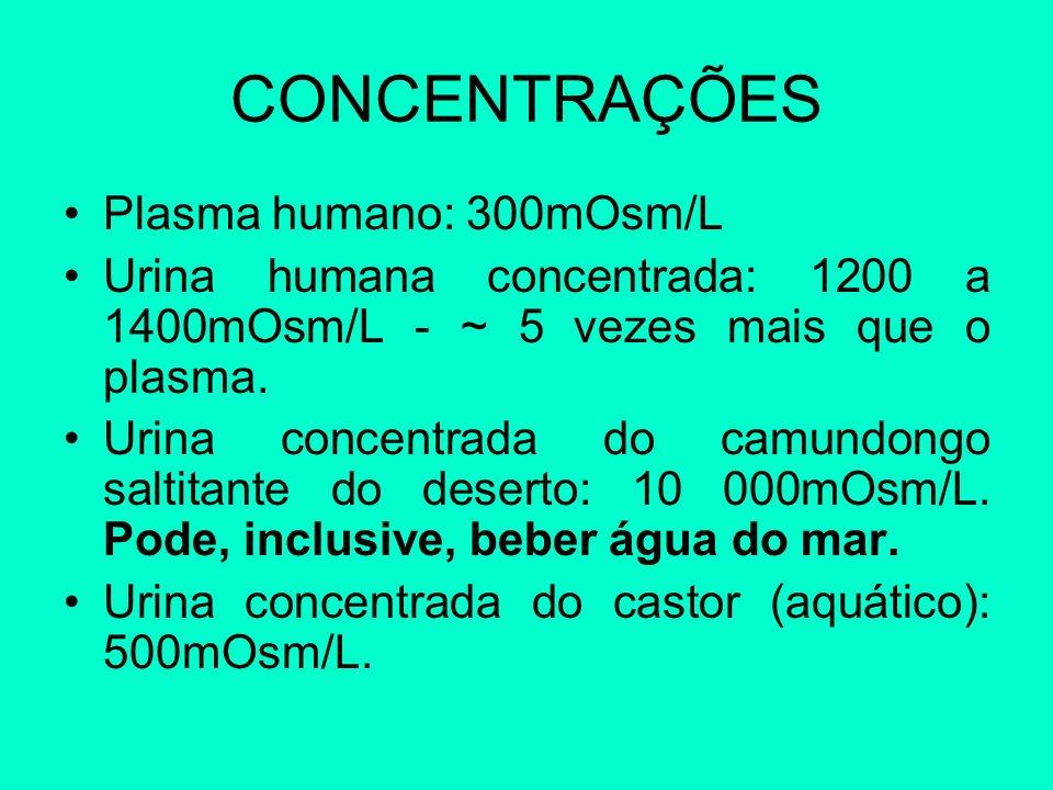 CONCENTRAÇÕES Plasma humano: 300mOsm/L Urina humana concentrada: 1200 a 1400mOsm/L - ~ 5 vezes mais que o plasma. Urina concentrada do camundongo salt