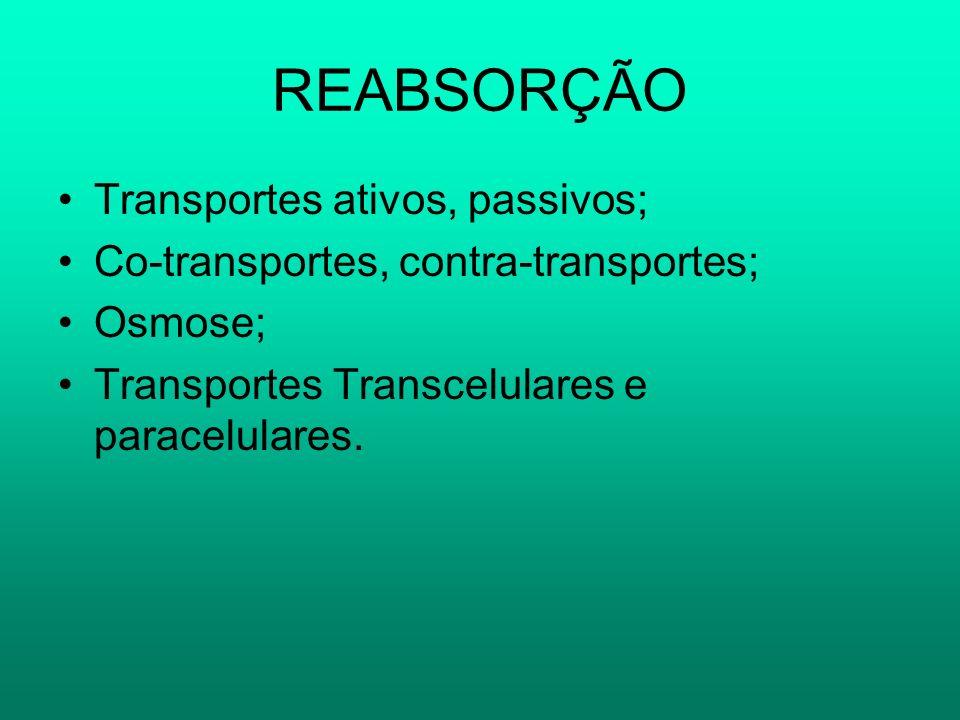 REABSORÇÃO Transportes ativos, passivos; Co-transportes, contra-transportes; Osmose; Transportes Transcelulares e paracelulares.