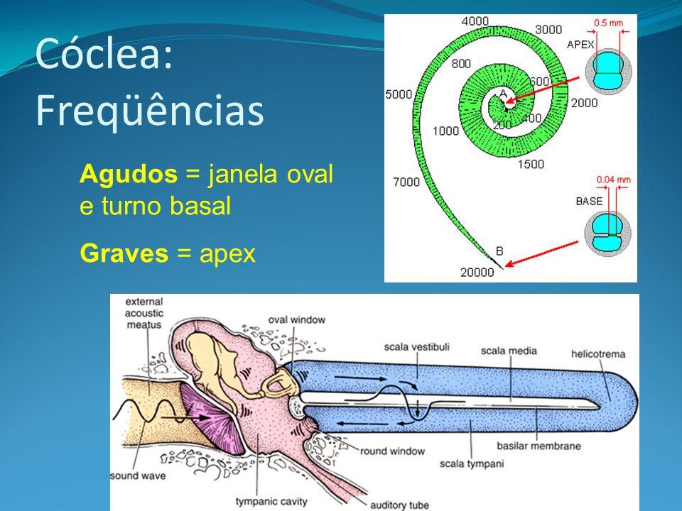 Cóclea: Freqüências Agudos = janela oval e turno basal Graves = apex