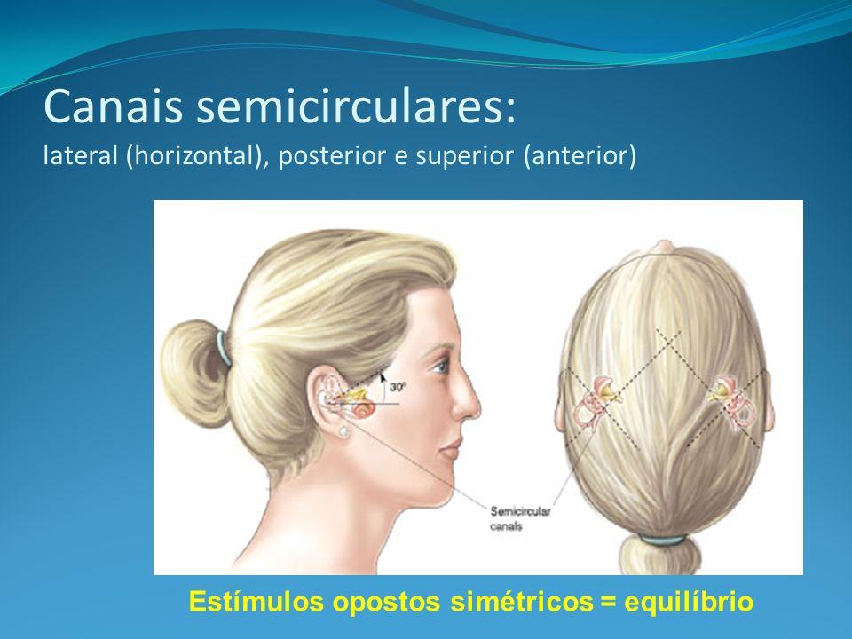 Canais semicirculares: lateral (horizontal), posterior e superior (anterior) Estímulos opostos simétricos = equilíbrio