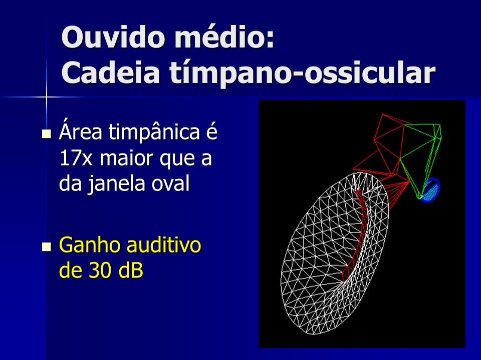 Ouvido médio: Cadeia tímpano-ossicular Área timpânica é 17x maior que a da janela oval Área timpânica é 17x maior que a da janela oval Ganho auditivo