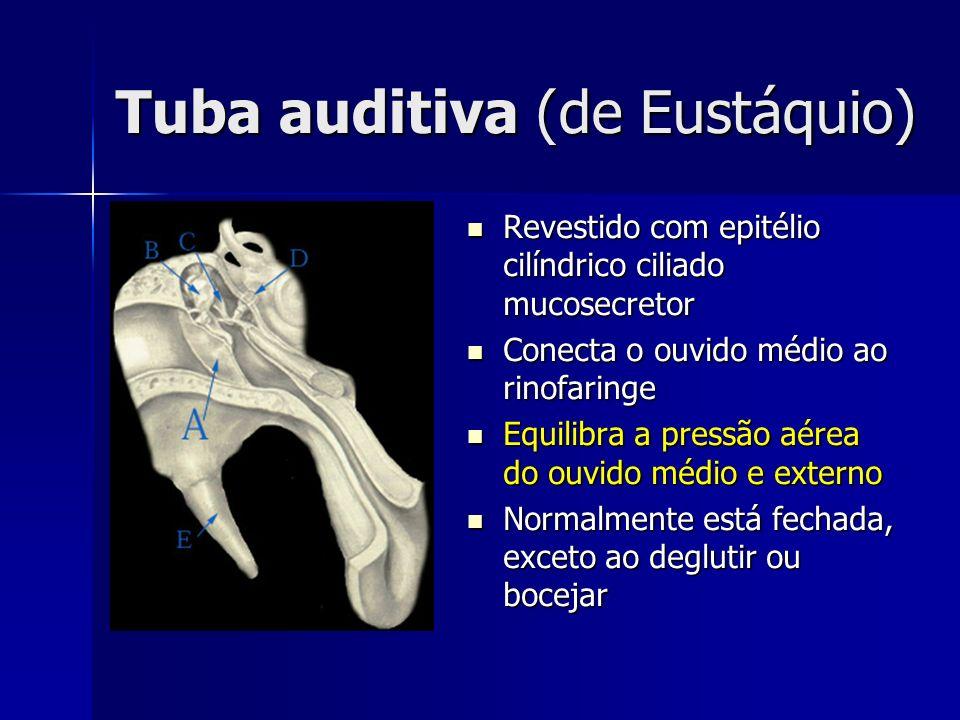 Músculo estapédio (do estribo) Contrai em resposta a sons >70dB (Reflexo Acústico), protegendo o ouvido interno de movimentos excessivos da platina do estribo Contrai em resposta a sons >70dB (Reflexo Acústico), protegendo o ouvido interno de movimentos excessivos da platina do estribo Inervado pelo Nervo Facial (VII) Inervado pelo Nervo Facial (VII) Músculo tensor do tímpano: inervado pelo Nervo Trigêmio (V)
