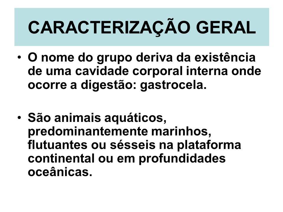 CARACTERIZAÇÃO GERAL O nome do grupo deriva da existência de uma cavidade corporal interna onde ocorre a digestão: gastrocela. São animais aquáticos,