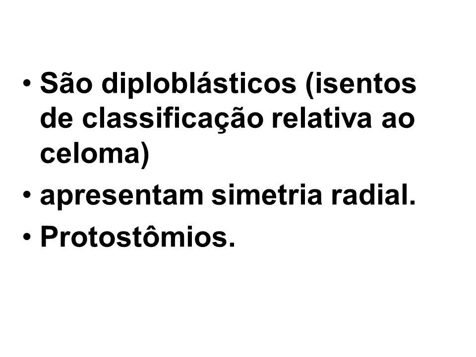 São diploblásticos (isentos de classificação relativa ao celoma) apresentam simetria radial. Protostômios.