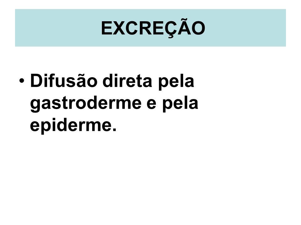EXCREÇÃO Difusão direta pela gastroderme e pela epiderme.