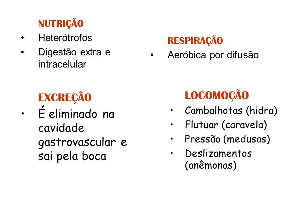 NUTRIÇÃO Heterótrofos Digestão extra e intracelular RESPIRAÇÃO Aeróbica por difusão LOCOMOÇÃO Cambalhotas (hidra) Flutuar (caravela) Pressão (medusas)