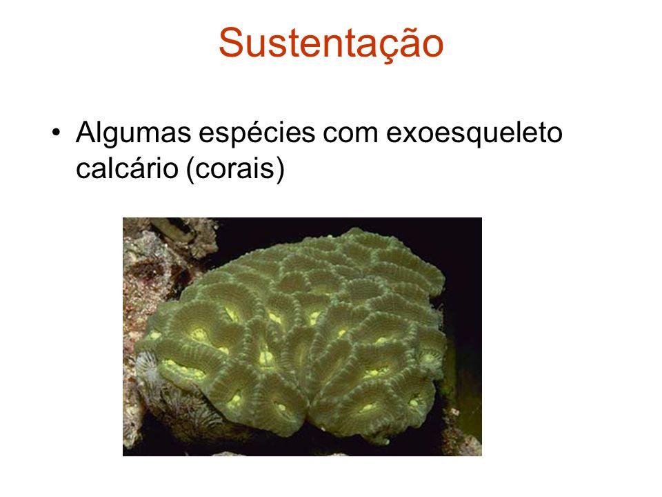 Sustentação Algumas espécies com exoesqueleto calcário (corais)