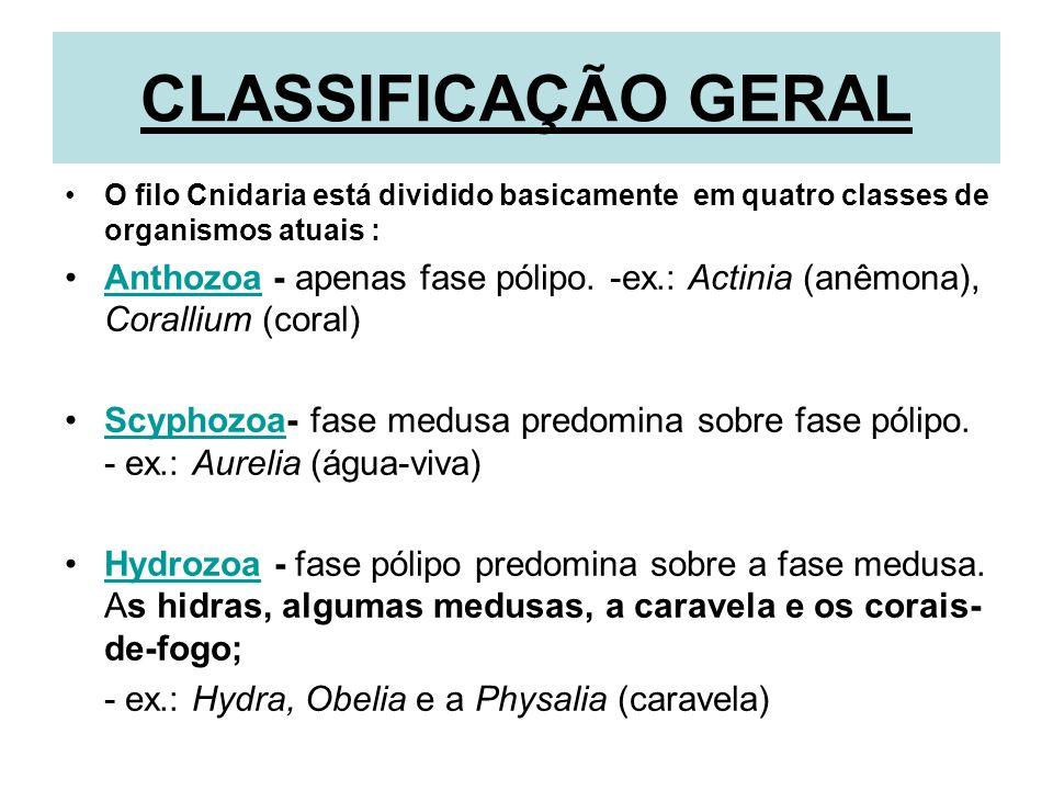 CLASSIFICAÇÃO GERAL O filo Cnidaria está dividido basicamente em quatro classes de organismos atuais : Anthozoa - apenas fase pólipo. -ex.: Actinia (a