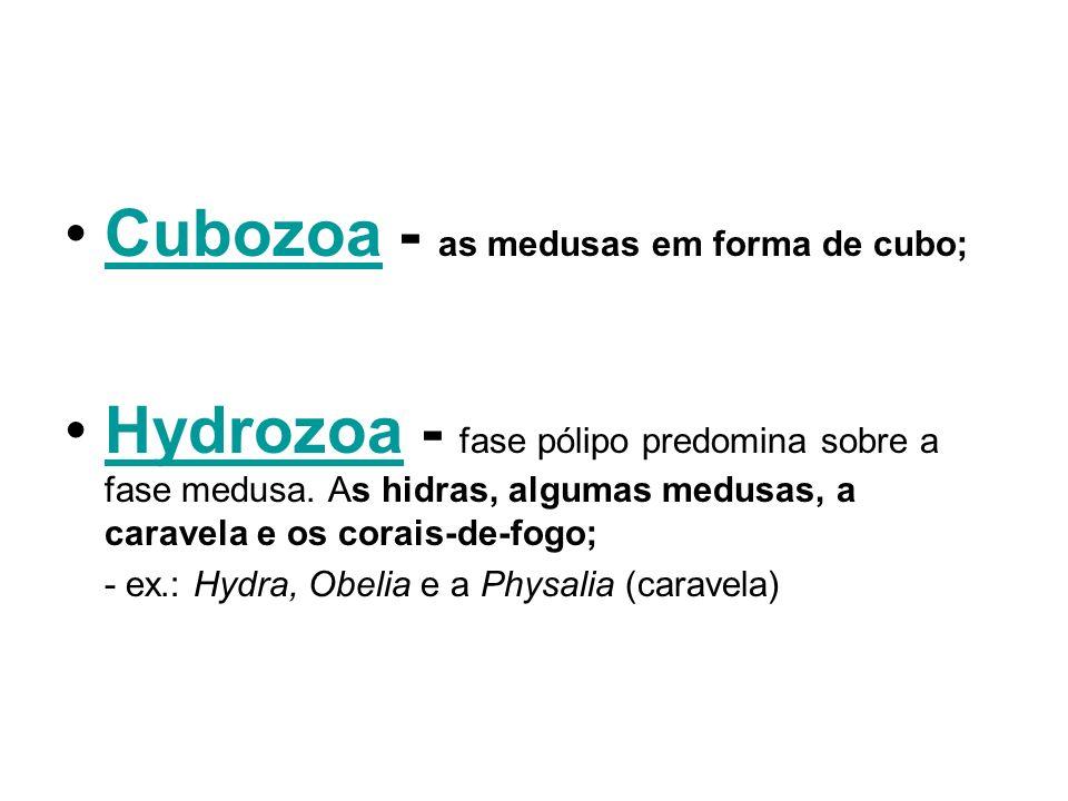 Cubozoa - as medusas em forma de cubo;Cubozoa Hydrozoa - fase pólipo predomina sobre a fase medusa. As hidras, algumas medusas, a caravela e os corais