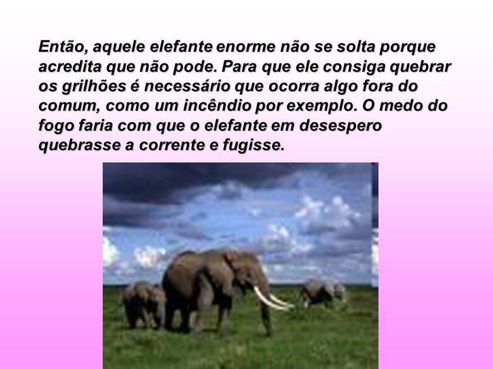 Então, aquele elefante enorme não se solta porque acredita que não pode. Para que ele consiga quebrar os grilhões é necessário que ocorra algo fora do