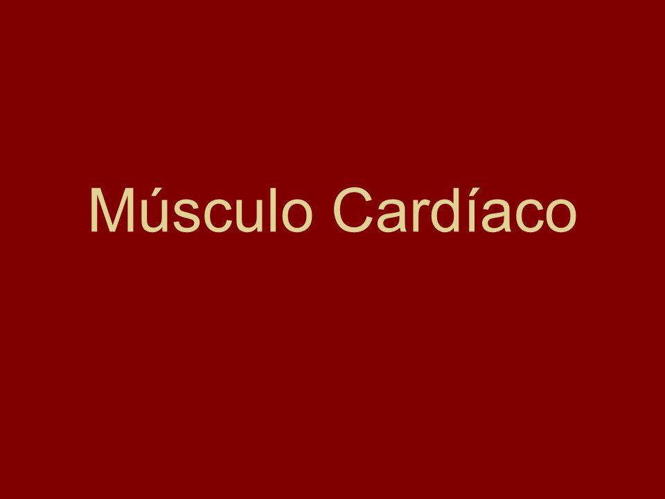 Músculo Cardíaco